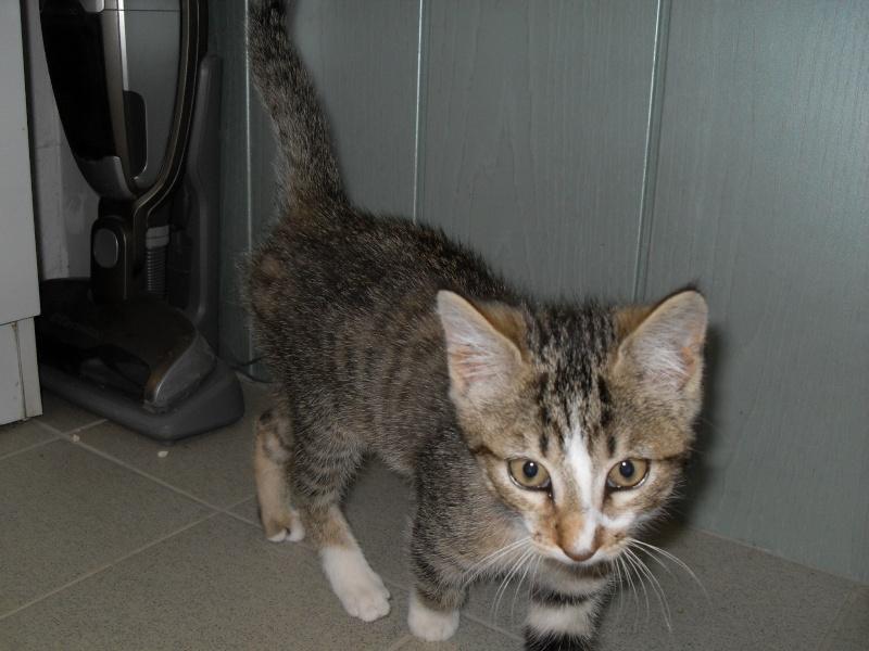 Hadès, chaton tigré et blanc né le 11/05/2012  par NADINE (36) Sdc15012