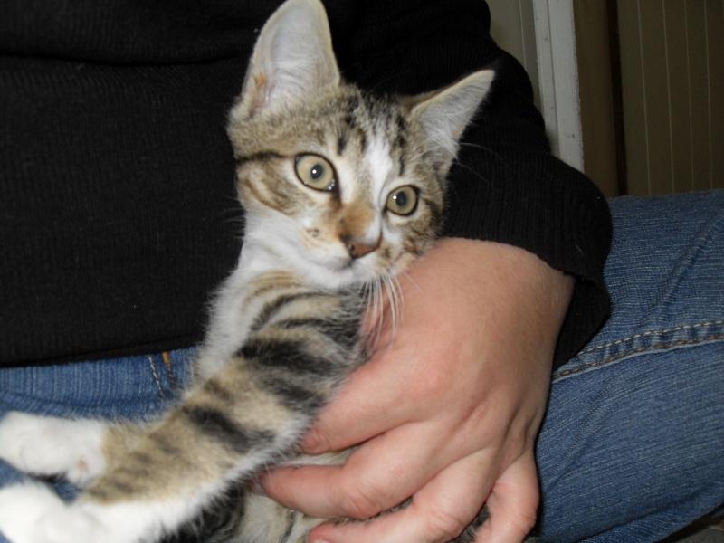 Hadès, chaton tigré et blanc né le 11/05/2012  par NADINE (36) Sdc15014
