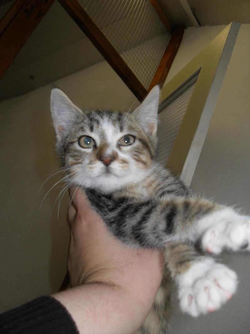 Hadès, chaton tigré et blanc né le 11/05/2012  par NADINE (36) Sdc15015