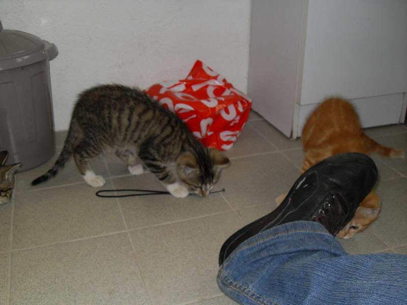 Hadès, chaton tigré et blanc né le 11/05/2012  par NADINE (36) Sdc15019