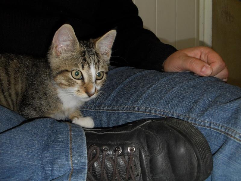 Hadès, chaton tigré et blanc né le 11/05/2012  par NADINE (36) Sdc15020