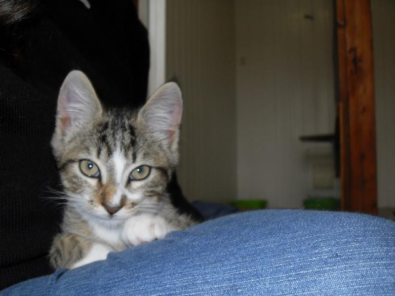 Hadès, chaton tigré et blanc né le 11/05/2012  par NADINE (36) Sdc15023