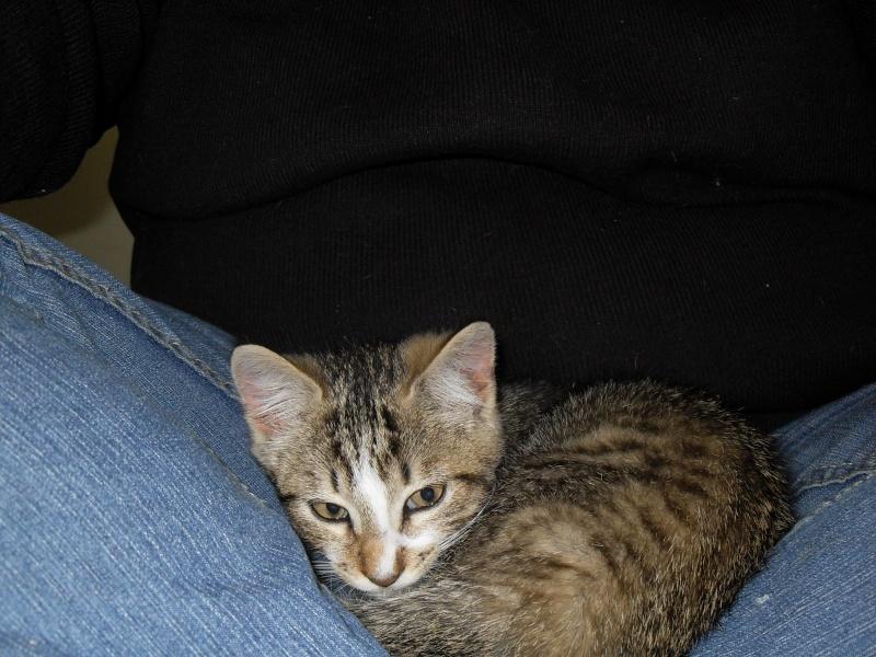Hadès, chaton tigré et blanc né le 11/05/2012  par NADINE (36) Sdc15025