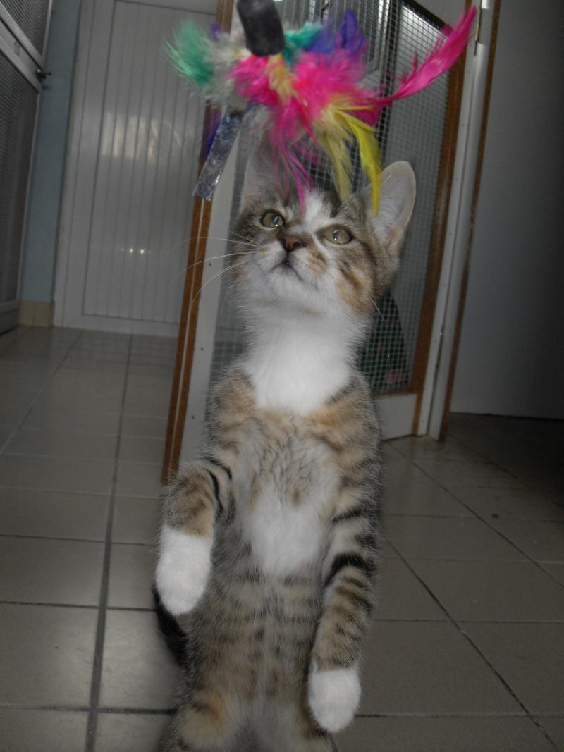 Hadès, chaton tigré et blanc né le 11/05/2012  par NADINE (36) Sdc15238