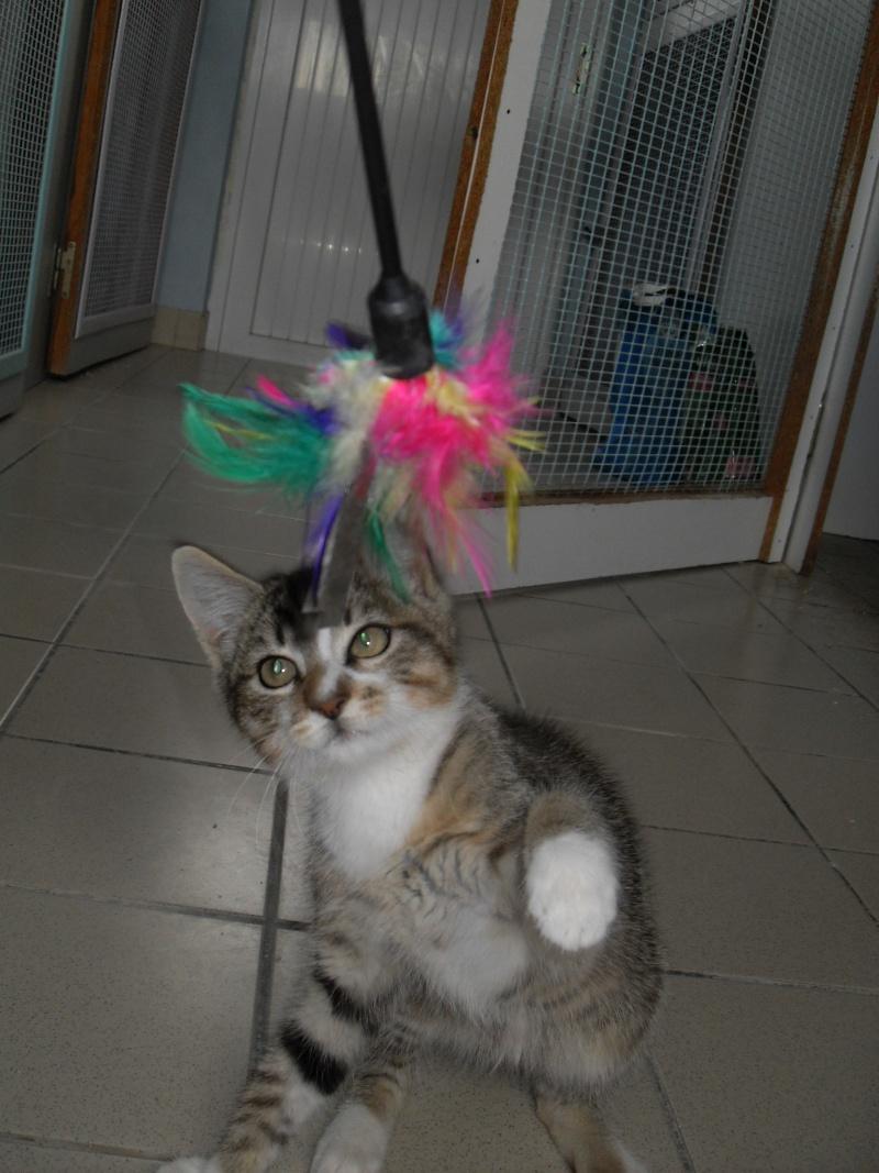 Hadès, chaton tigré et blanc né le 11/05/2012  par NADINE (36) Sdc15239