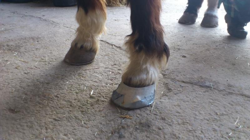 Protection d'un pied après creusement d'un abcès Dsc_7111