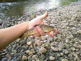 soiré pêche improvisé Sp_a0415