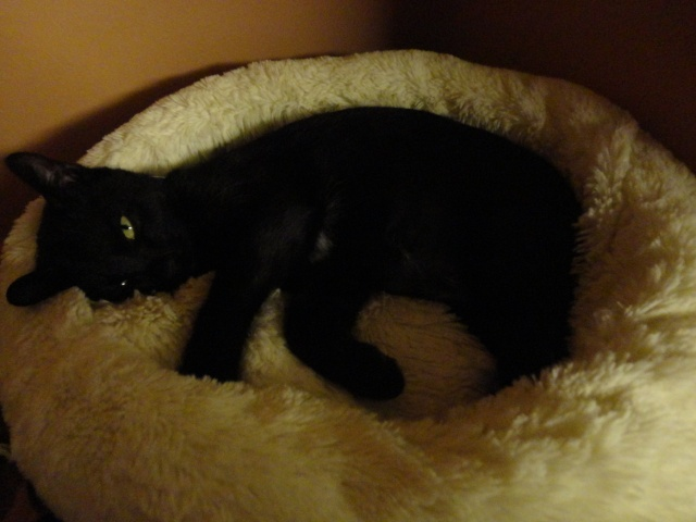 SOOKIE femelle noire de 5 mois et demi  - Page 3 2012-012