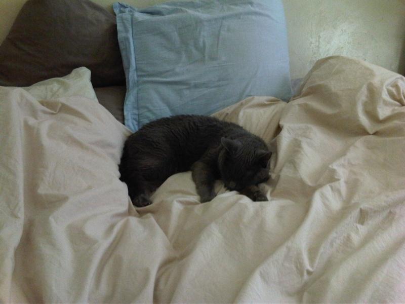 KALI femelle grise de 11 ans sourde  - Page 4 2012-040