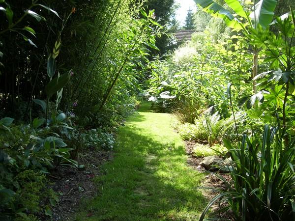 Visite de mon jardin Jardin10