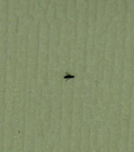 Envahi par des petite mouchette noire Img_1313