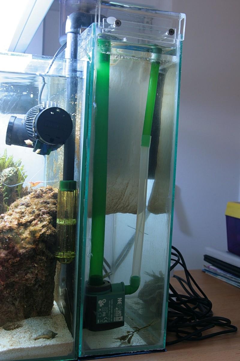 soucis d'algues Img_8116