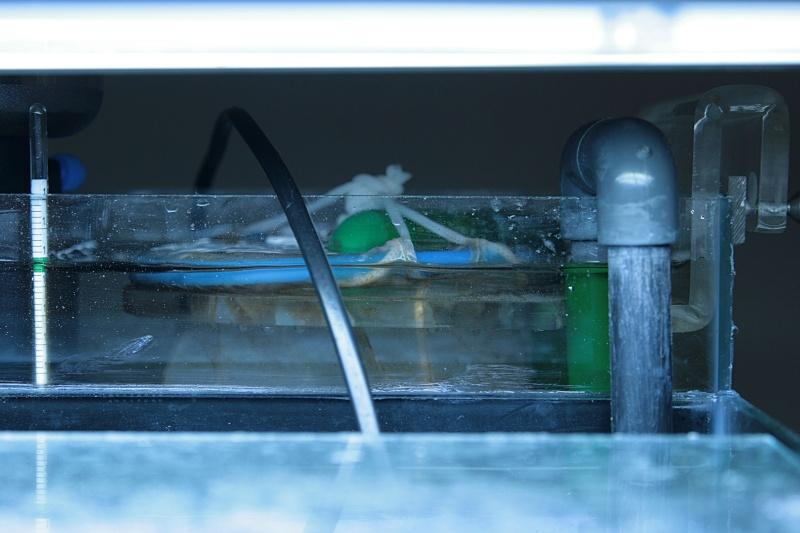 soucis d'algues Img_8117