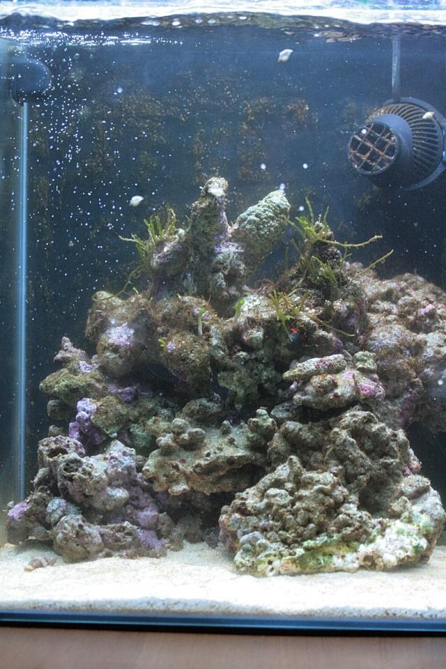 soucis d'algues Img_8125