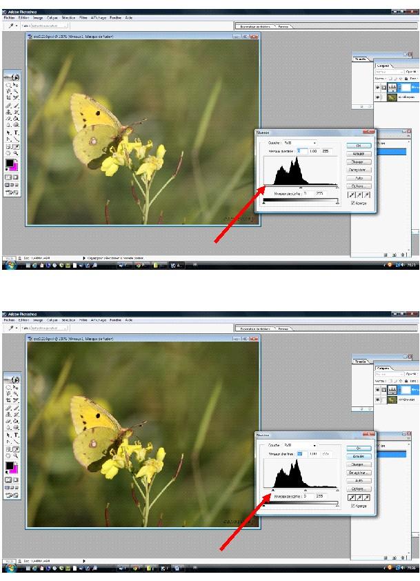 Papillon jaune citron Papill10