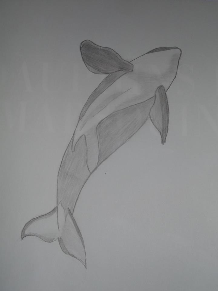 (dessin) dessin d'orque - Page 3 42912110
