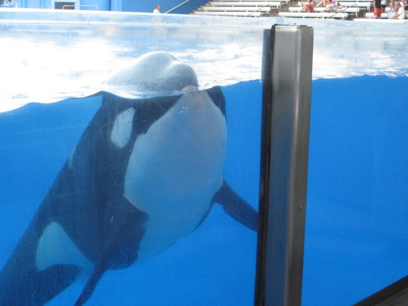 [Photos] Orques aux vitres Img_0018