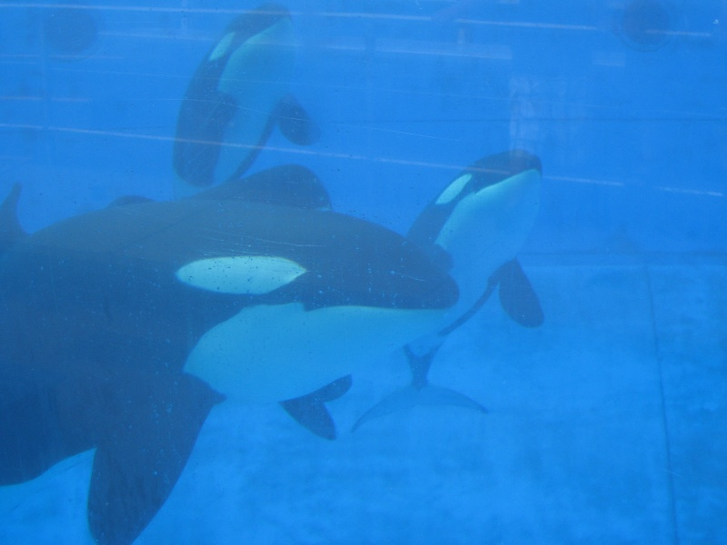 [Photos] Orques aux vitres Img_0217