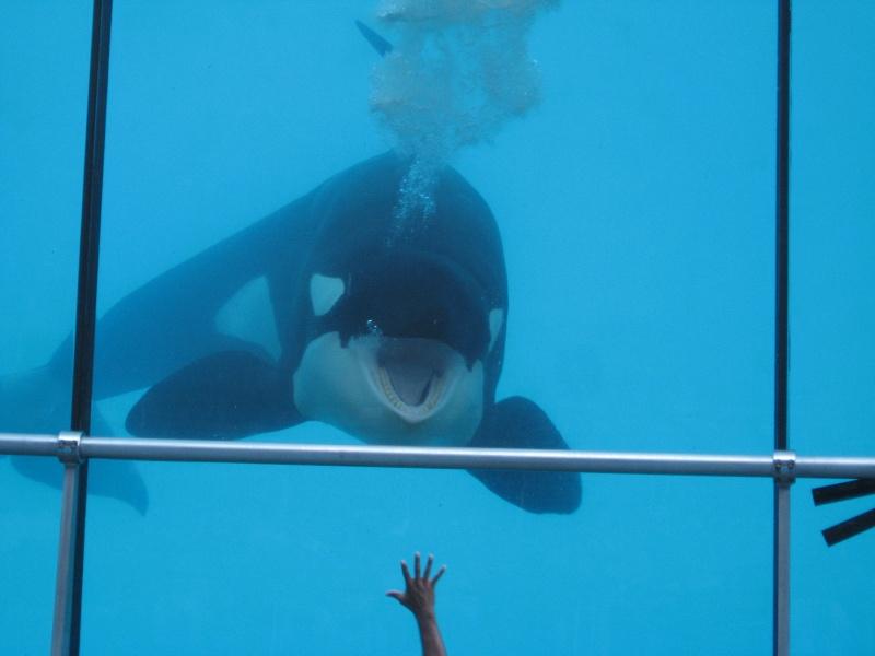 [Photos] Orques aux vitres Img_0910
