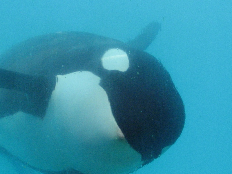 [Photos] Orques aux vitres Img_2411