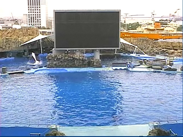 Nagoya aquarium 2012 - Page 3 Nagoya10