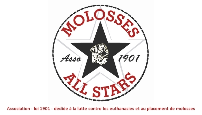 Molosses All Stars