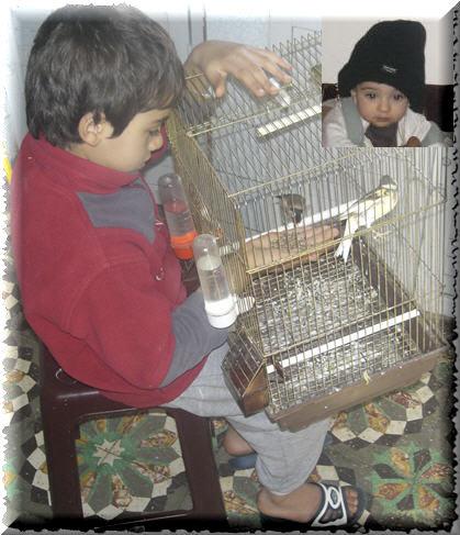 quelques photos avec mes oiseaux  0810