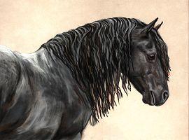 """Cavalo """"Friesian"""" ( ou Frisio ) 311"""