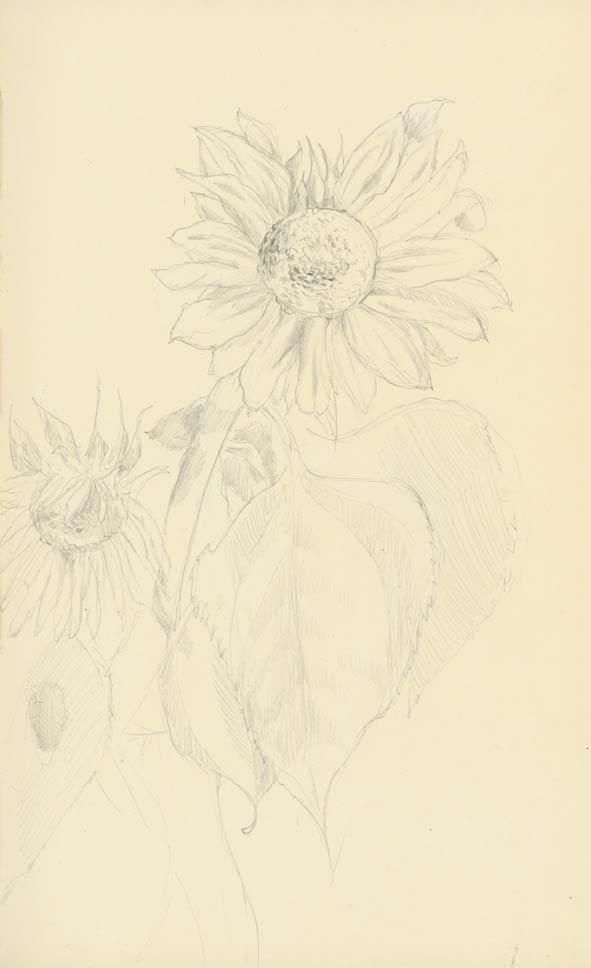 Mes dessins ! - Page 3 11082718