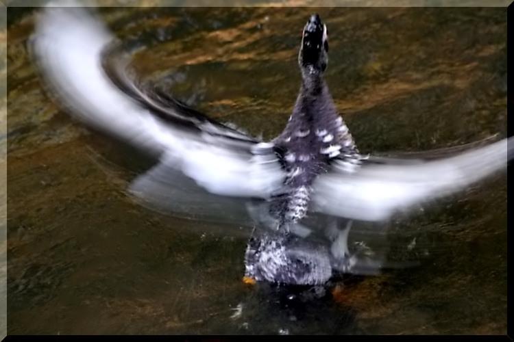 effets d'ailes Effet_10
