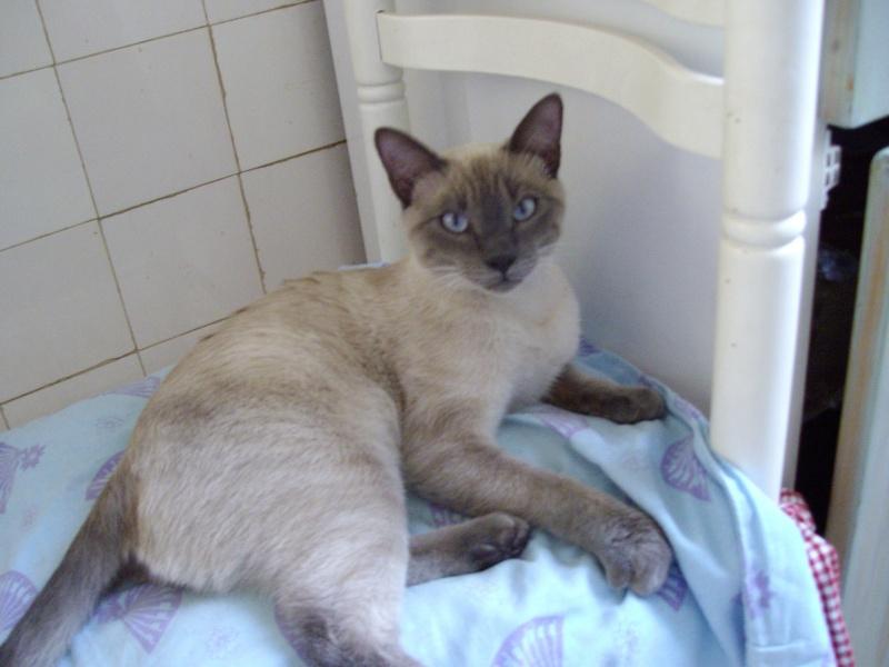 [Bilan] Journée adoption / 5 Novembre 2011 Gatou10