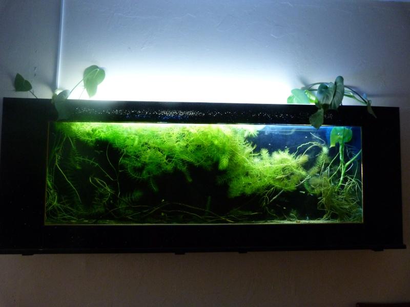 aquarium plasma 70l P1000125