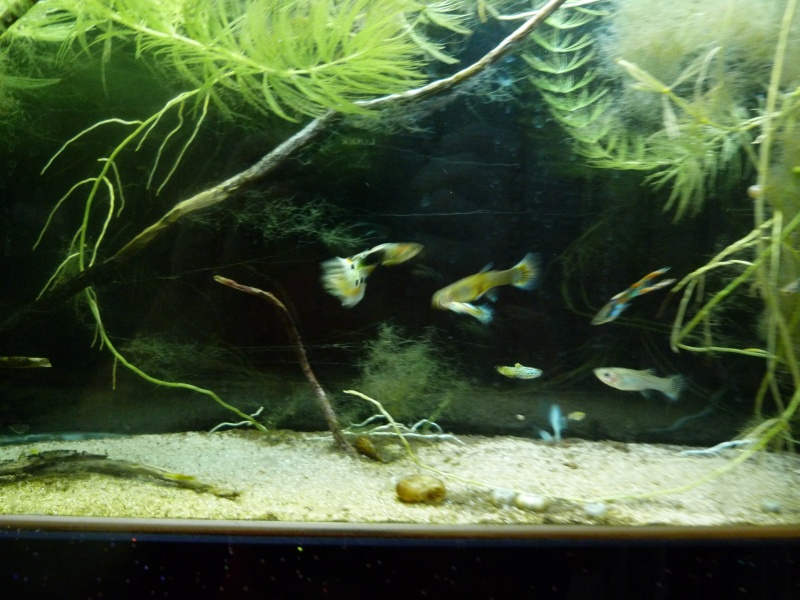aquarium plasma 70l P1000126