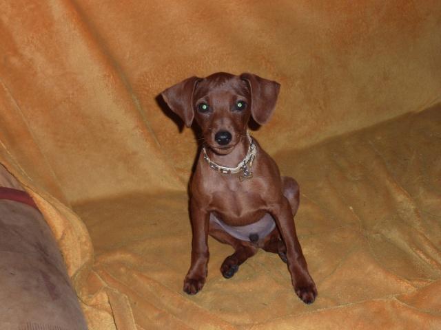 Adoption Héro (Guetta) 6 mois mâle fauve en Bretagne + ajout photo //  ADOPTE  Lumix210
