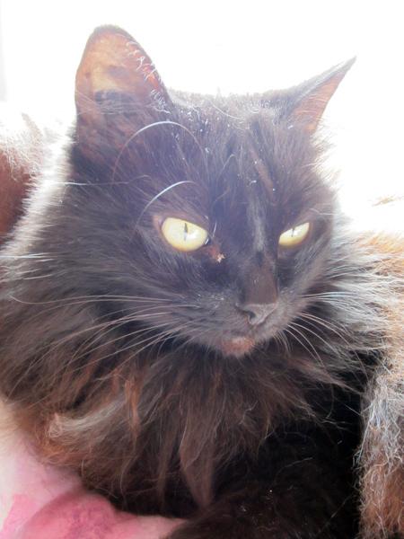 E'Sethi Accuente, le chaton voyageur - Page 6 Kemt2410