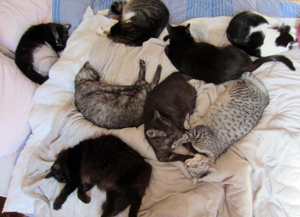 Allergies : ne laissez pas votre chat rentrer dans la chambre ! Litd_a10