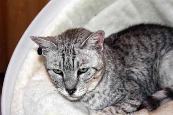 E'Sethi Accuente, le chaton voyageur - Page 5 Loulou10