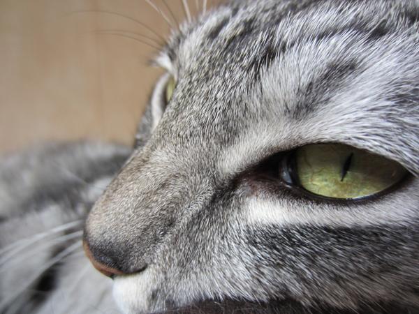 E'Sethi Accuente, le chaton voyageur - Page 6 Oeilde10