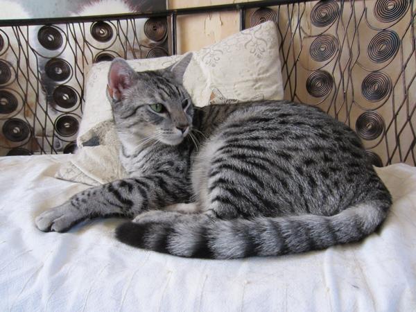 E'Sethi Accuente, le chaton voyageur - Page 6 Sethi211