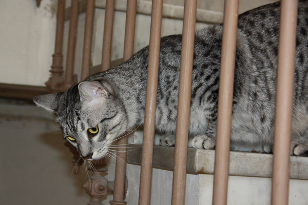 E'Sethi Accuente, le chaton voyageur - Page 5 Sethie10