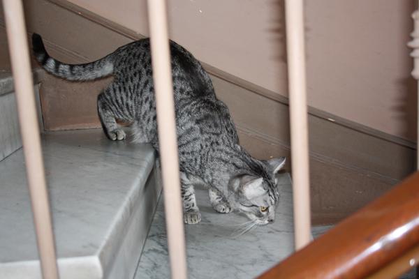 E'Sethi Accuente, le chaton voyageur - Page 5 Sethie11