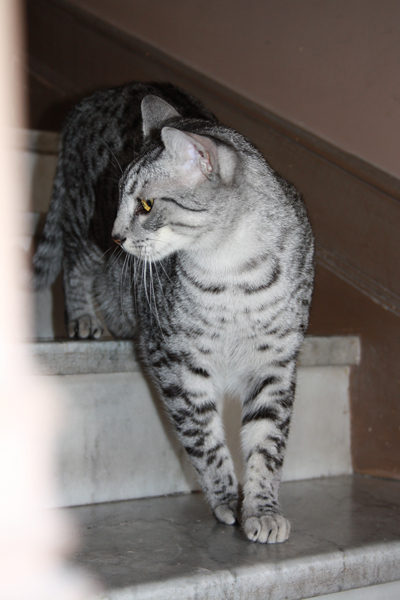 E'Sethi Accuente, le chaton voyageur - Page 5 Sethif10