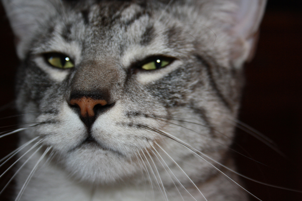 E'Sethi Accuente, le chaton voyageur - Page 5 Sethin10