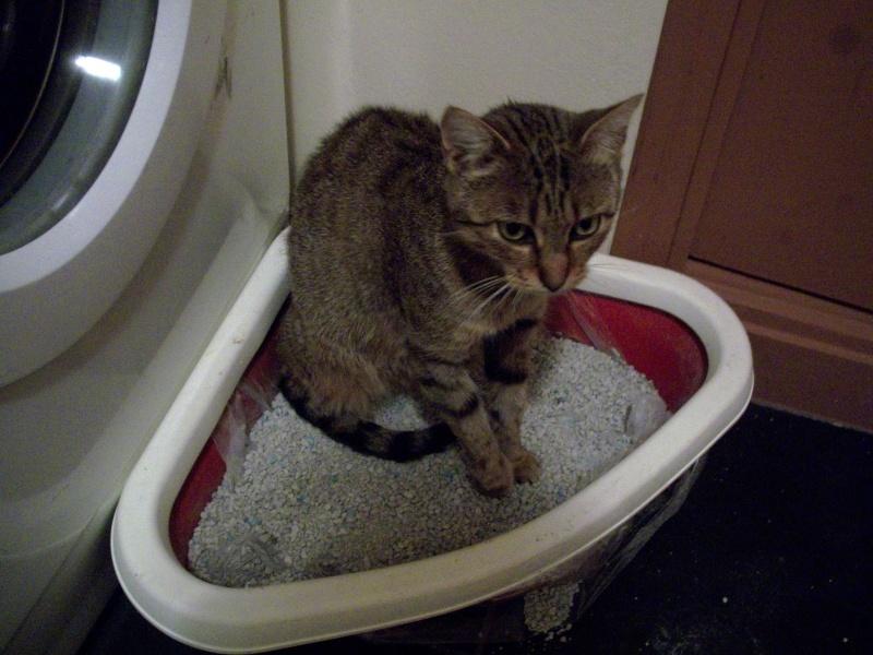 trouvé chat maigre et blessé dans mon jardin 100_1721