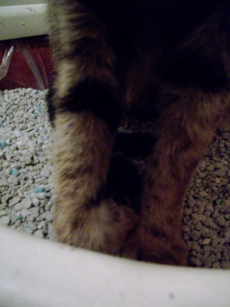 trouvé chat maigre et blessé dans mon jardin 100_1722