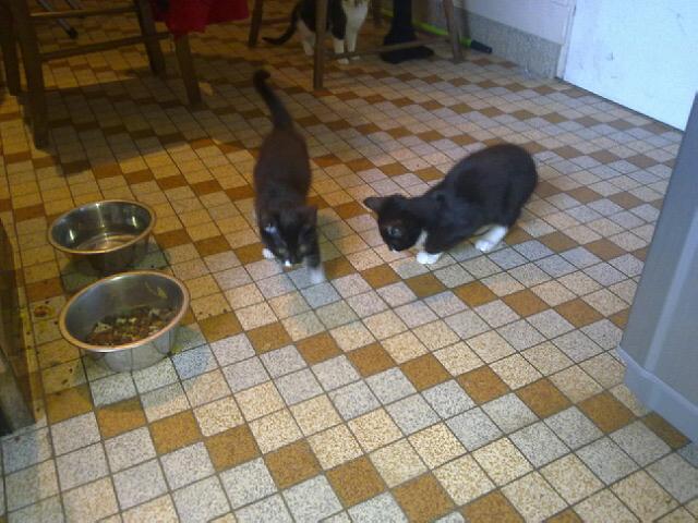 3 petits chatons environ 3/4 mois, 2 garçons et une fille 25102011