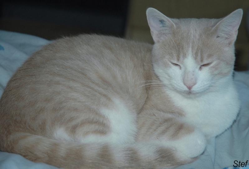 Caramel, roux et blanc, né en décembre 2010, identifié HWX959 Dsc_1014