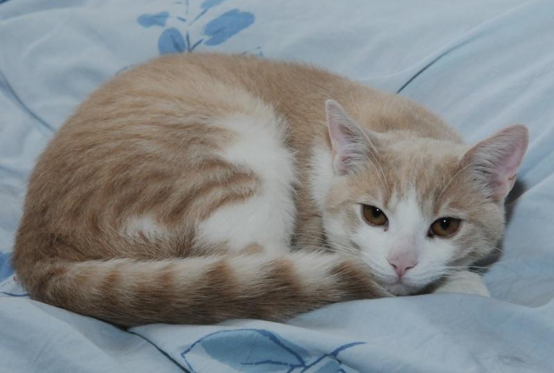 Caramel, roux et blanc, né en décembre 2010, identifié HWX959 Dsc_1410