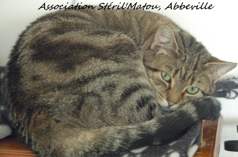 FLEUR, chatte tigré, identifiée HSF716 Dsc_3030