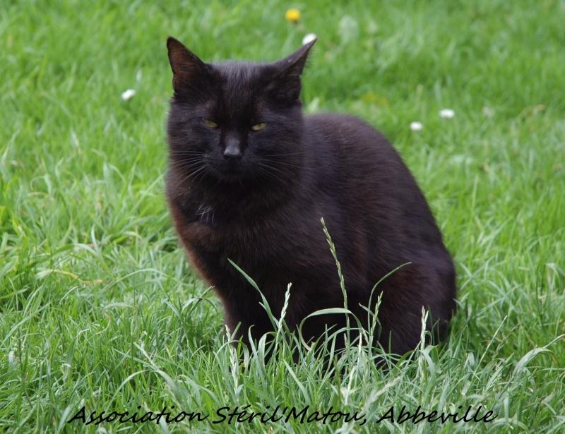 Mikado, chaton mâle noir, né le 1 mai 2011, identifié 250269604307901  Dsc_5320